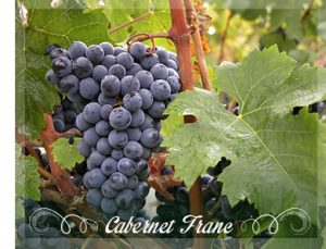 cabernet-franc-grapes_1