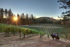 Hawk & Horse Vineyards