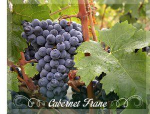 cabernet-franc-grapes_1