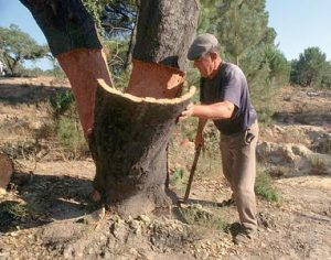 cork-tree-with-man