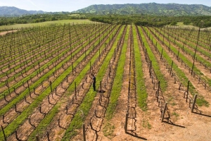 Berryessa Gap Vineyards