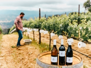 T.P. Reserve Wine